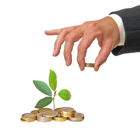 sapling growing from coins photo