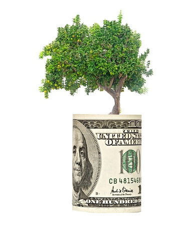 orange tree  growing from euro bill photo