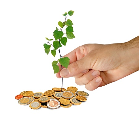 Planting sapling to coins photo