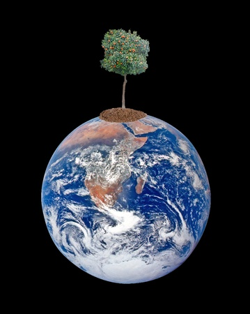 Tree on Earth as a symbol of pease and feeding the world Stock Photo - 12505173
