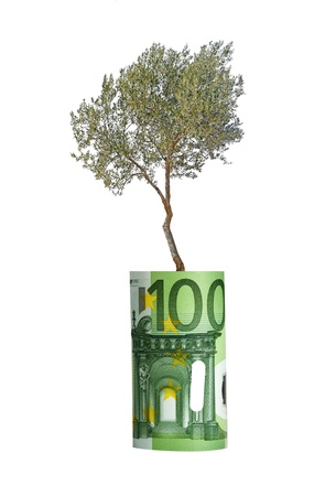 Olive tree growing from euro bill photo