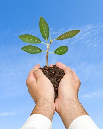 emergent: sapling in hands