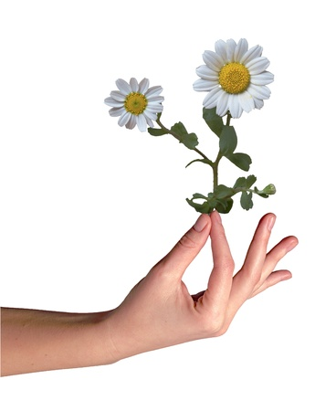 Mayweed en la mano photo