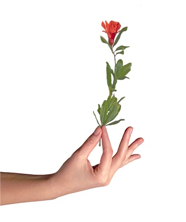 hand holding plant: Flower in hand