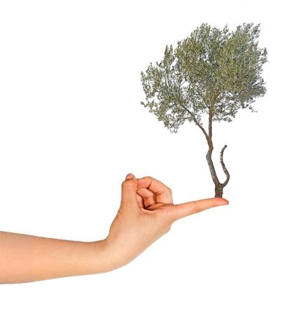 Olive on finger photo