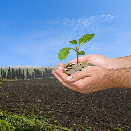 subsidy: Cabbage seedling in hands