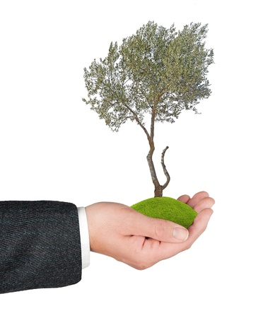 Olive tree in hand photo