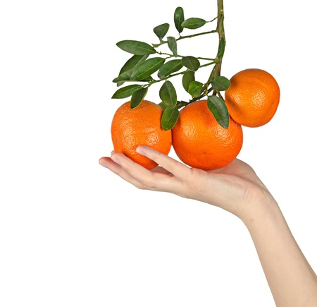 woman holding ripe tangerines photo