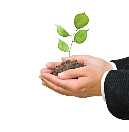 sapling in hands photo