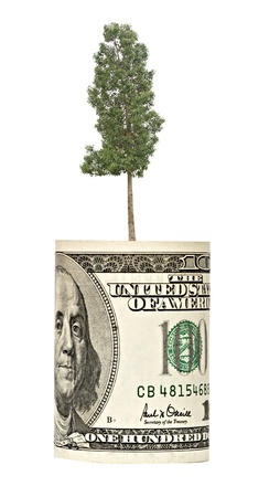 ecosavy: tree growing from dollar bill