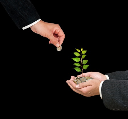 Palms with a tree growng from pile of coins Stock Photo - 12657729