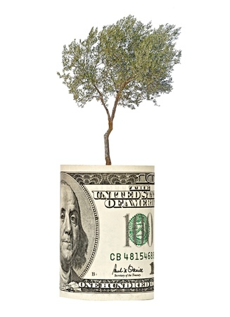 Olive tree growing from dollar bill photo