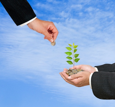 Palms with a tree growng from pile of coins Stock Photo - 12869857