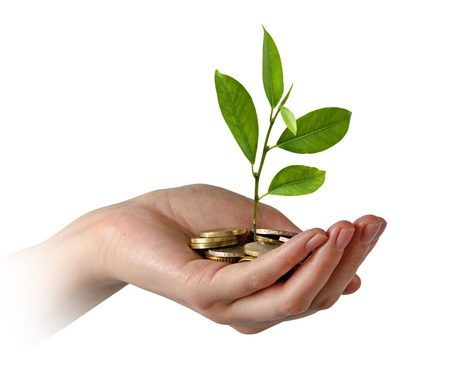 Sapling growing from pile of coins photo