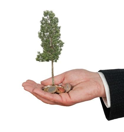 sembrando un arbol: Plantar un �rbol