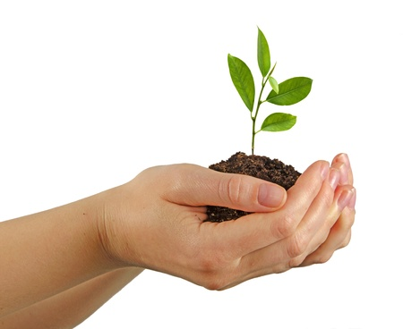 plantando arbol: Árbol que crece desde el suelo