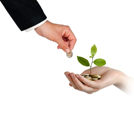 Sapling growing from pile of coins Stock Photo - 12870005