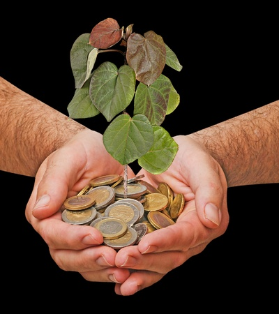 Palms with a tree growng from pile of coins Stock Photo - 12992198