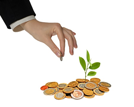 Citrus sapling growing from pile of coins Stock Photo - 13414409