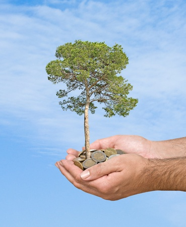 Palms with a pine tree growing from pile of coins Stock Photo - 13543725