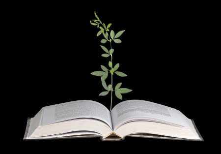 plant growing from open book photo