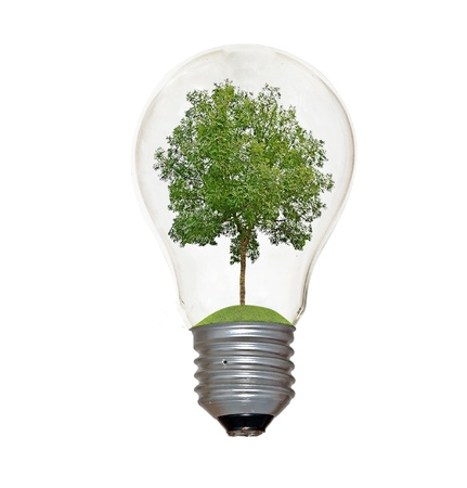 offset up: tree in lamp