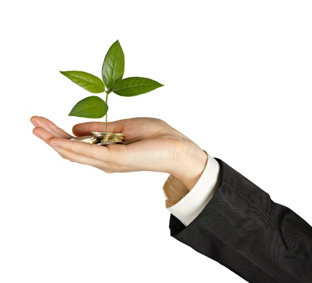 Palms with a tree growng from pile of coins Stock Photo - 14101043