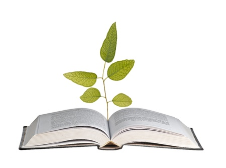 tree growing from open book photo