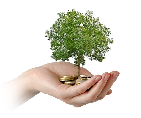white fund: Palms with a tree growng from pile of coins