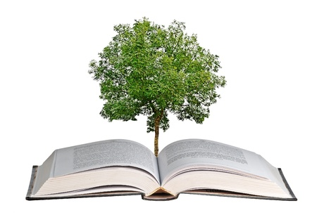 offset up:  tree growing from open book Stock Photo