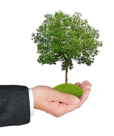 Tree in hand Stock Photo - 14625771
