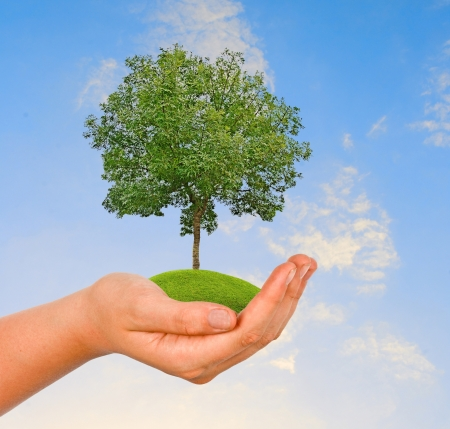 Tree in hand Stock Photo - 14625800