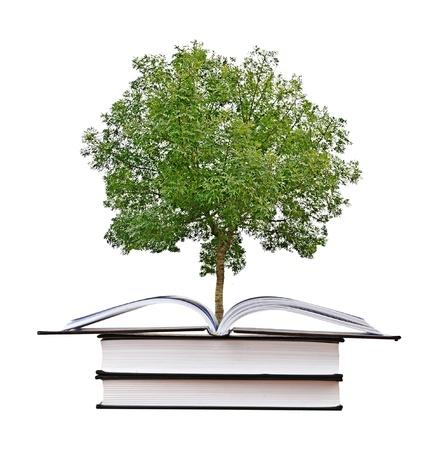 knowledge: Baum w�chst von open book