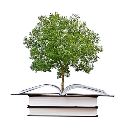 knowledge tree:  tree growing from open book Stock Photo