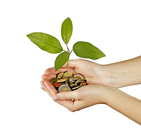 tree growng from pile of coins Stock Photo - 14942056