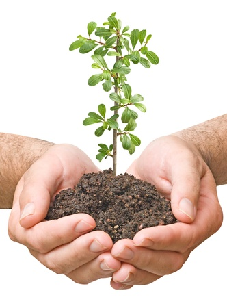 ecosavy:  seedling in hands