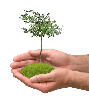 tree in hands Stock Photo - 15101515