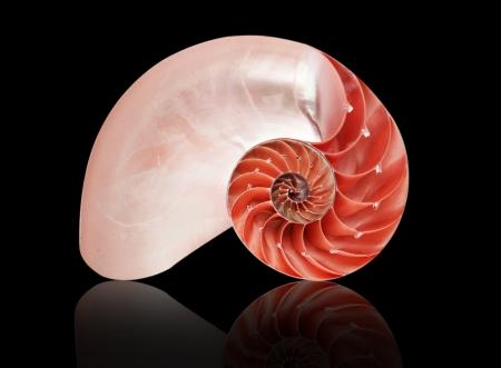 Nautilus muszla