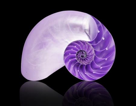 pearl shell: Nautilus shell