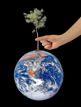 tree planting: Tree on Earth as a symbol of peace.Elements of this image furnished by NASA