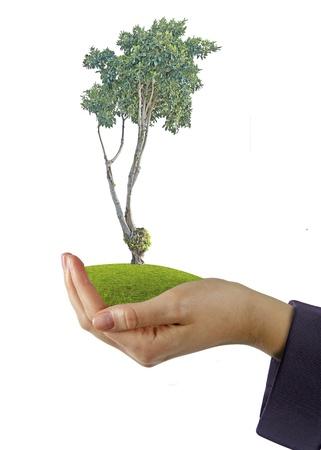 tree in hands Stock Photo - 15484076