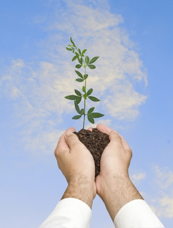 seedling in hand Stock Photo