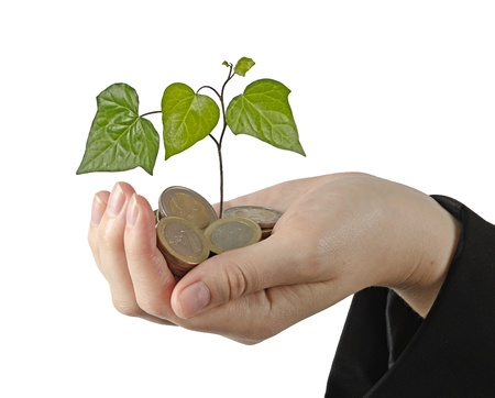 plant growng from pile of coins Stock Photo - 15766057