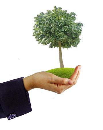 tree in hand Stock Photo - 15771963
