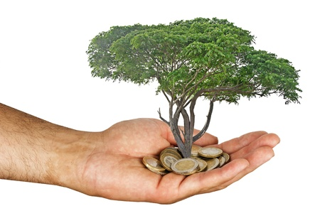 tree growng from pile of coins photo