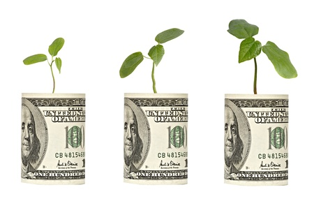 ecosavy:  sapling growing from dollar bill