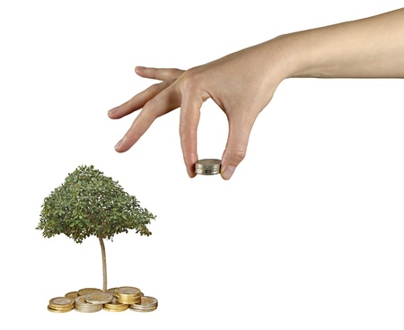 tree growng from pile of coins Stock Photo - 16421218