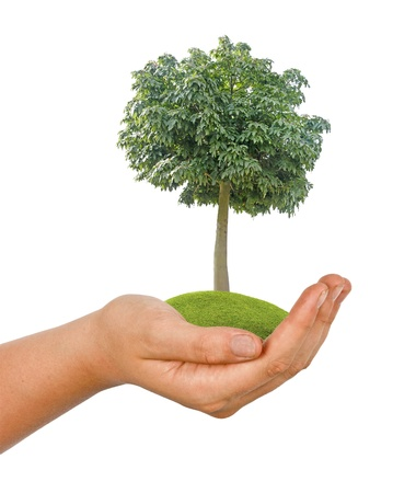tree in hand Stock Photo - 16420865