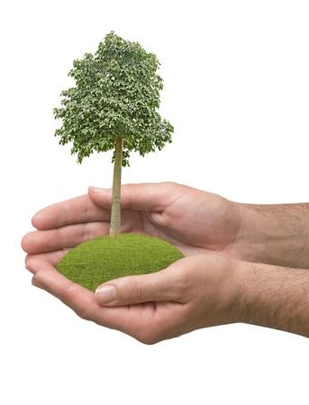 tree in hands Stock Photo - 16506390