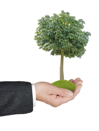 tree in hand Stock Photo - 16506388